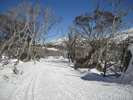 Cross-country course at Perisher
