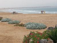 Beach at Henties Bay