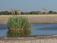 Chudop Waterhole, Etosha National Park